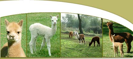 Northern California Alpacas